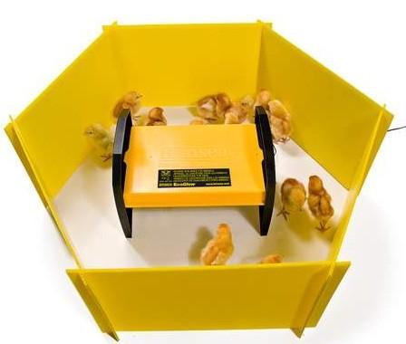 Chick Enclosure Panels At The Incubator Shop