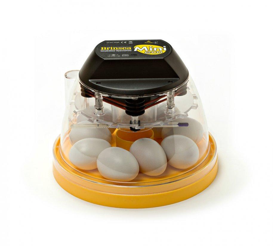 Amature egg